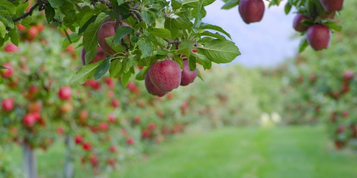 What are Hybrid Crops?